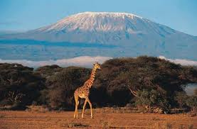 Kilimanjaro climbing trips and Safaris