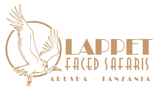 Lappet faced safaris, travel company